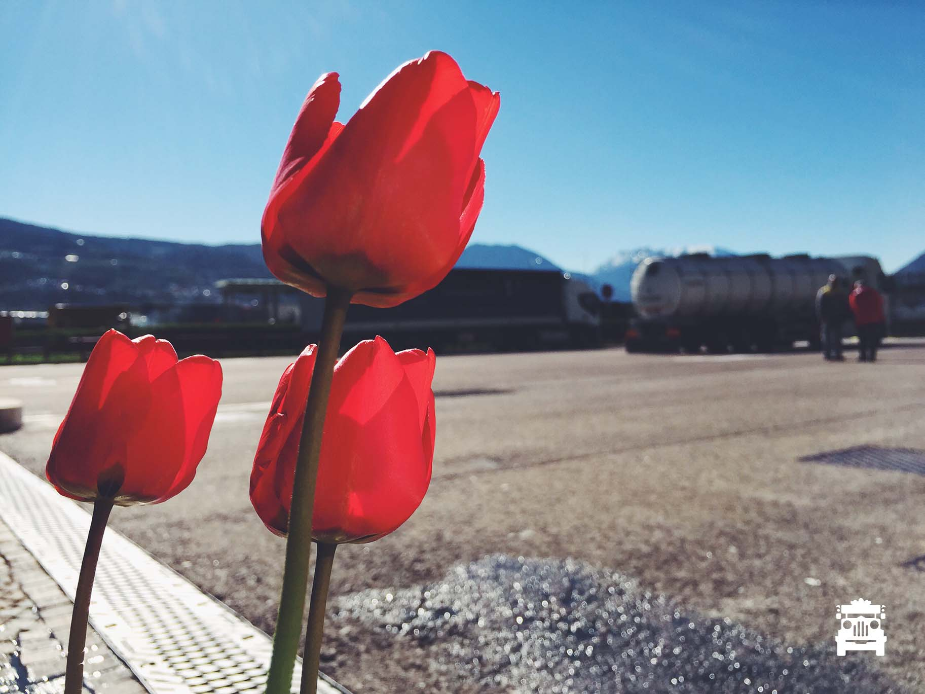 Tulips at the service station